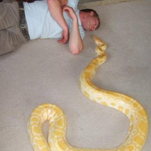 Thích nuôi trăn rắn trong nhà, người đàn ông không ngờ cái kết bi thảm lại xảy đến với mình - Ảnh 1.