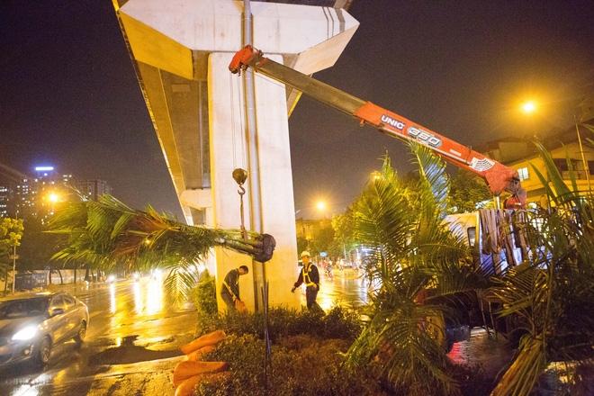 Hà Nội: Bất chấp đêm tối, trời mưa, hàng chục công nhân vẫn miệt mài trồng cau cảnh dưới đường tàu trên cao - Ảnh 5.