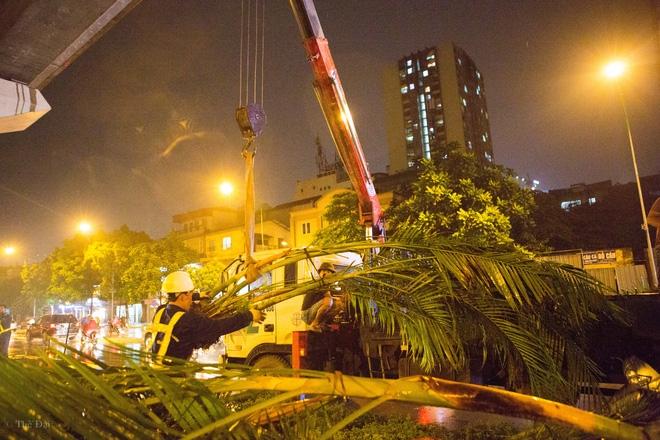 Hà Nội: Bất chấp đêm tối, trời mưa, hàng chục công nhân vẫn miệt mài trồng cau cảnh dưới đường tàu trên cao - Ảnh 6.