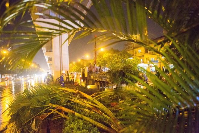 Hà Nội: Bất chấp đêm tối, trời mưa, hàng chục công nhân vẫn miệt mài trồng cau cảnh dưới đường tàu trên cao - Ảnh 9.