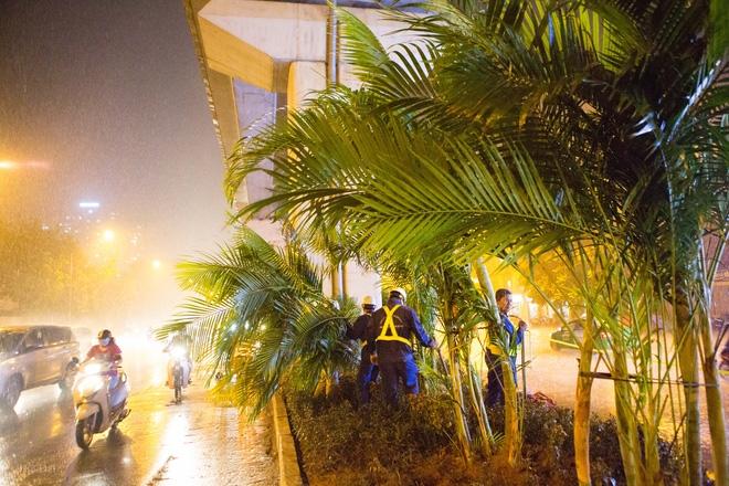 Hà Nội: Bất chấp đêm tối, trời mưa, hàng chục công nhân vẫn miệt mài trồng cau cảnh dưới đường tàu trên cao - Ảnh 10.