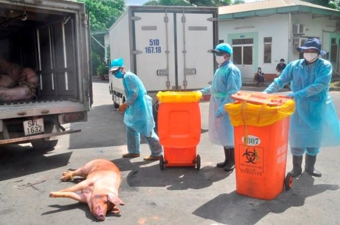 """Cận cảnh lò tiêu hủy gần 4000 con heo bị tiêm thuốc """"an thần"""" - ảnh 3"""