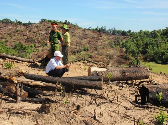 Chủ mưu vụ phá gần 61ha rừng ở huyện An Lão (Bình Định) chính là Tổng Giám đốc một doanh nghiệp