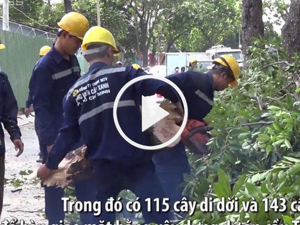 Video: Đốn hạ loạt cây xanh để làm cầu nối trung tâm Sài Gòn với quận 2