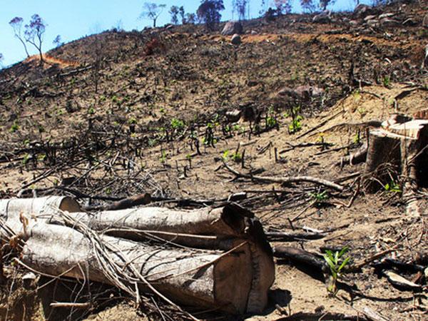 Vụ phá rừng quy mô lớn ở Bình Định: Khởi tố thêm 5 bị can