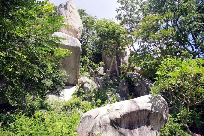 Bên trong ngôi chùa có đàn khỉ hoang dã lớn nhất Việt Nam
