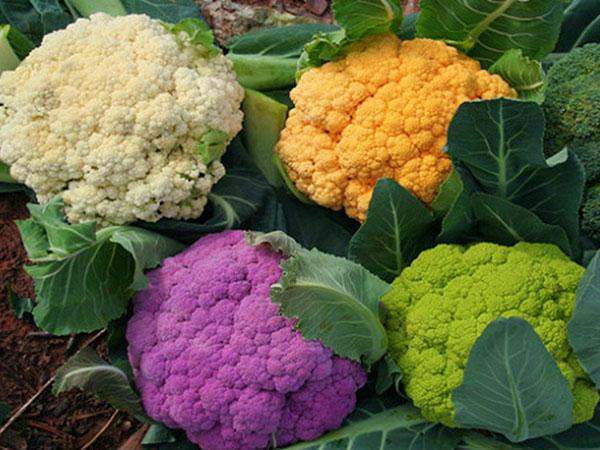 Giáo sư dinh dưỡng chia sẻ cách biến 10 thực phẩm thông thường thành vị thuốc quý