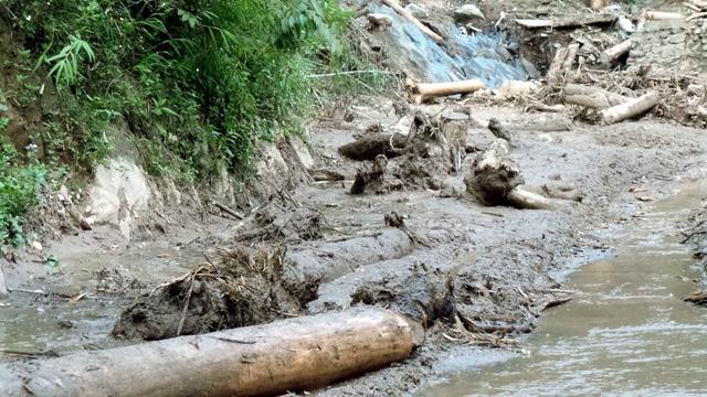 Không chỉ có đất đá, nhiều cây gỗ cũng trôi theo.