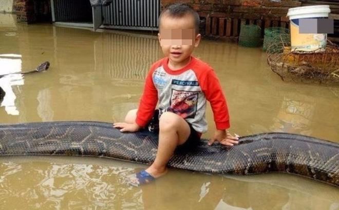 Clip bé trai cưỡi trăn khủng giữa nước ngập: Bất ngờ thông tin từ chủ nhân con trăn