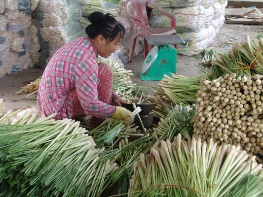 Giá sả rớt kỷ lục còn 2.000 đồng/kg, nông dân đốt bỏ cả vườn - 4