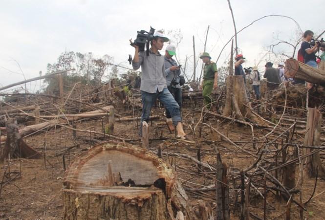Lũ quét, lở đất do mất rừng: Ai chịu trách nhiệm? - ảnh 2