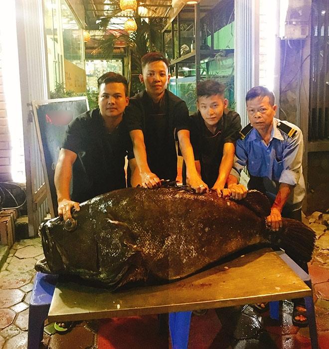"""""""Thủy quái"""" nặng hơn 1 tạ được đưa từ vịnh Thái Lan về Hà Nội - 1"""