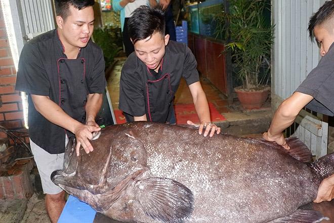 """""""Thủy quái"""" nặng hơn 1 tạ được đưa từ vịnh Thái Lan về Hà Nội - 2"""