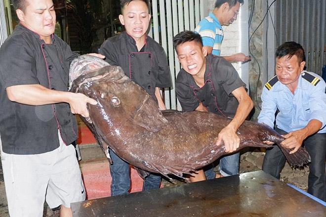 """""""Thủy quái"""" nặng hơn 1 tạ được đưa từ vịnh Thái Lan về Hà Nội - 4"""