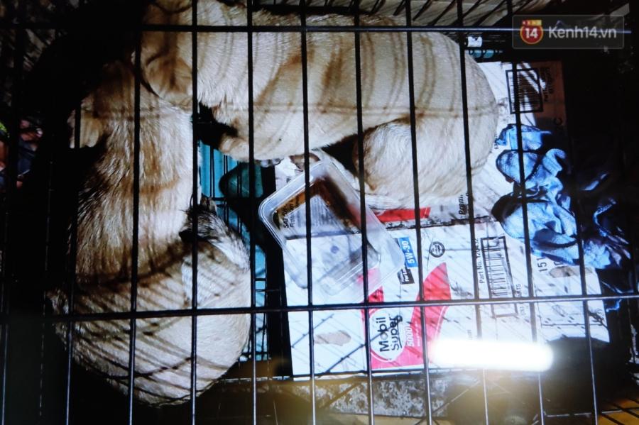 Clip 2 chú chó bị kéo lê đến chảy máu trên đường phố và đoạn kết đẹp từ sự bao đồng của người Sài Gòn - Ảnh 2.