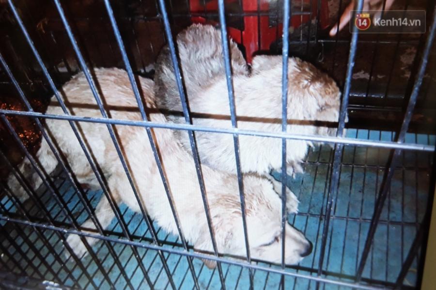 Clip 2 chú chó bị kéo lê đến chảy máu trên đường phố và đoạn kết đẹp từ sự bao đồng của người Sài Gòn - Ảnh 3.