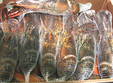 tôm hùm,tôm hùm canada,hải sản nhập khẩu,đặc sản nhà giàu
