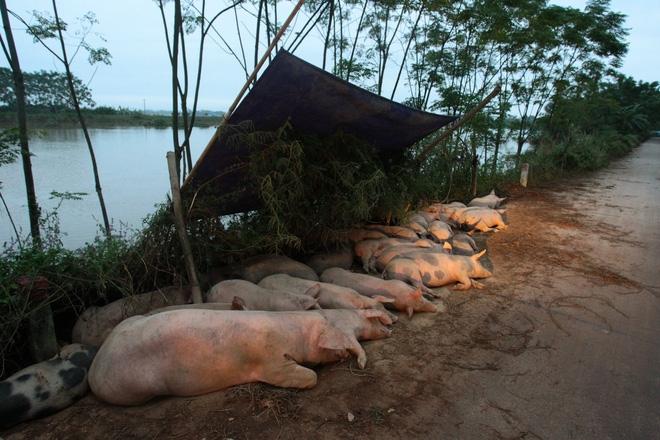Hà Nội: 10 ngày sau lũ, người dân Tân Tiến rắc vôi bột trắng đường phòng bệnh dịch - Ảnh 6.